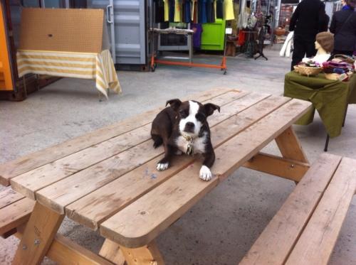 Meet Dewey the shop dog at the Boutique featuring Etsy artists. Dewey's the boss at Dekalb Market.
