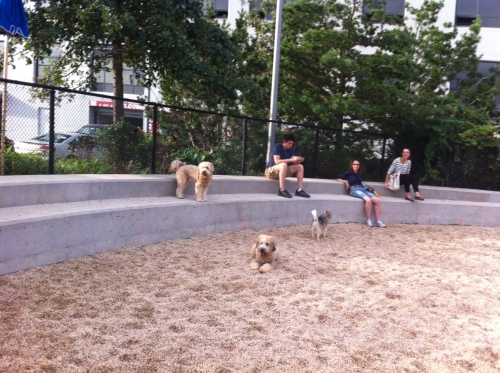 Pier 6 Dog Run gets a makeover!