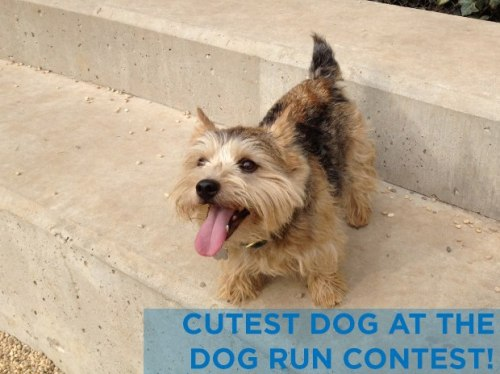 Dog Run Contest