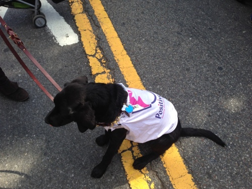 This pup is helping spread the word about Positive Tails, a non-profit that helps pet owners pay for veterinary care.